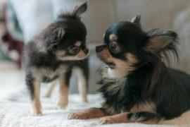 同居犬は最愛のパートナー
