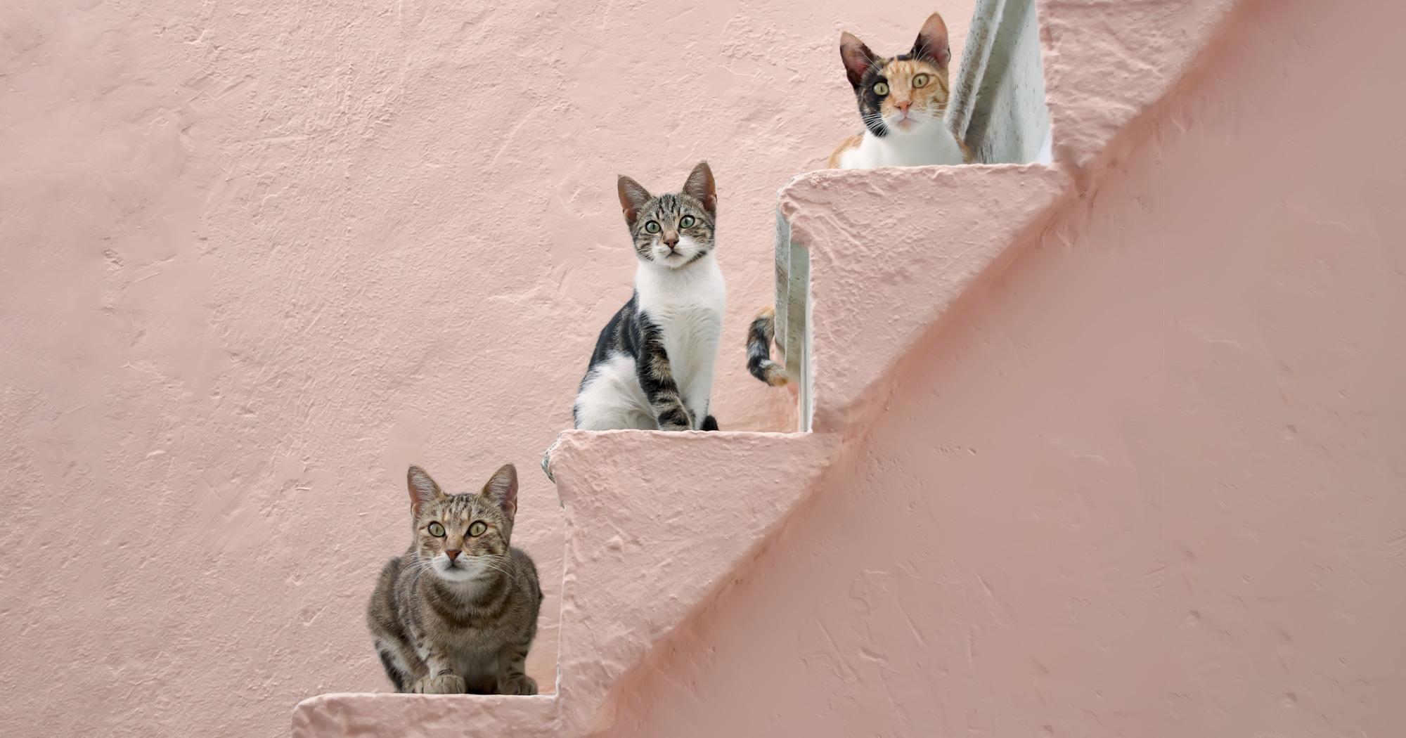 3匹の猫たちと共に歩む、おひとりさまの充実した人生